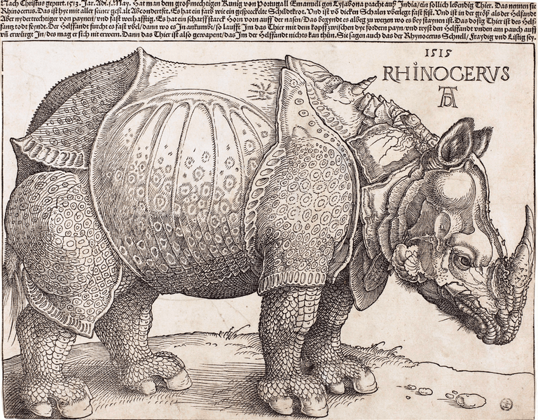 Rhinoceros Project – Skidmore College
